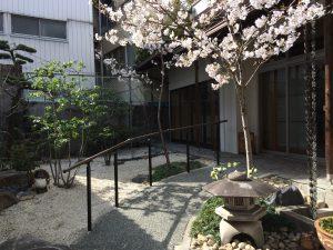 千代田ヴィレッジ中庭桜