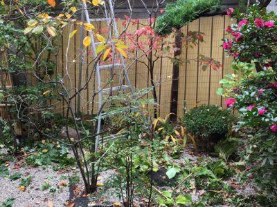 千代田ヴィレッジのお庭を剪定しました!!