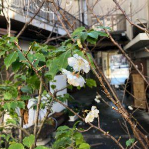 レンタルスペース名古屋和室千代田ヴィレッジ